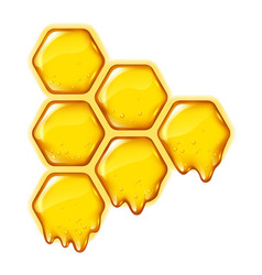 yellow honeycombs with flowing honey isolated vector image