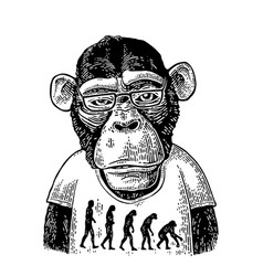 monkeys in a t-shirt with the theory of evolution vector image