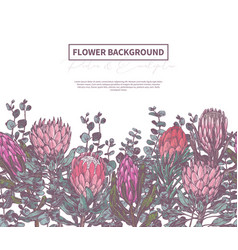Background with sketch drawing protea vector