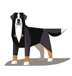 bernese mountain dog minimalist image vector image