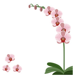 Card pink orchid flowers vector