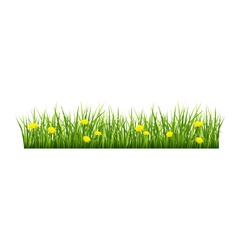 Grass with yellow flowers vector image