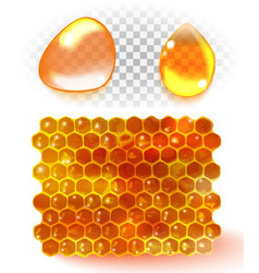 honey comb honey drop isolated on white background vector image