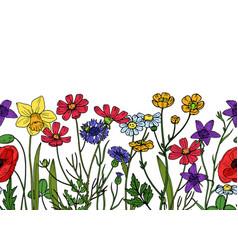 Wild flowers seamless border field meadow herb vector