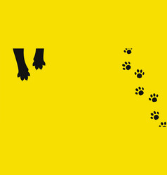 background paws and cat tracks vector image