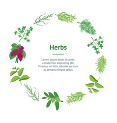 Herb banner card circle dill parsley basil mint vector