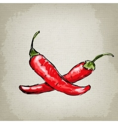 Hot chilli pepper vector