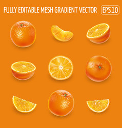 Set ripe oranges on an orange background vector
