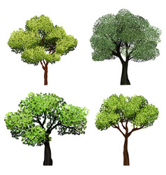 Trees realistic nature garden botanical vector