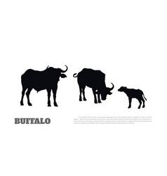black silhouette african buffalo vector image