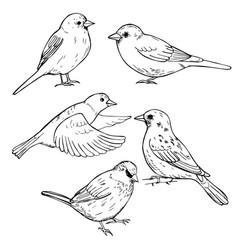 Hand drawn sparrows sketch vector