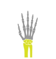 Flat Icon of Hand Bones on White Background vector image vector image