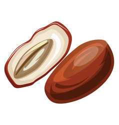 brown and white raw date cut in half cartoon vector image