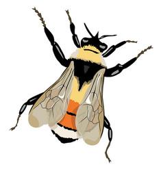 Bumble-bee vector