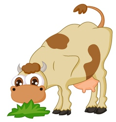 Cartoon cow eating grass vector