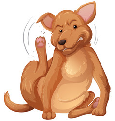 Dog itching white background vector