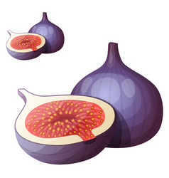 fig fruit cartoon icon isolated on white vector image