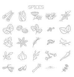 Thin line spices icon set vector