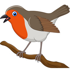 cartoon beautiful robin bird vector image