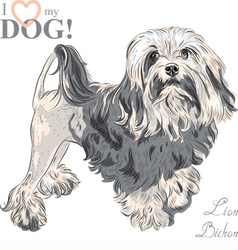 dog breed Lowchen Lion Bichon vector image