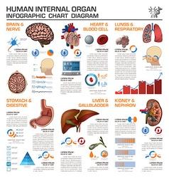 Human Internal Organ Health And Medical vector image