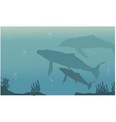 Landscape whale on ocean silhouette vector