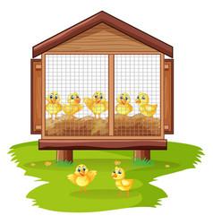 Little chicks in chicken coop vector