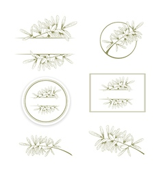 Olive or Argan Oil Vintage Design Collection vector image