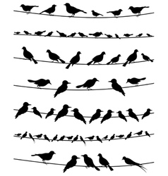 Set of birds on wires vector