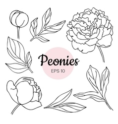 set of monochrome black and white peony vector image