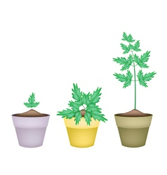 Three water dropwort in ceramic flower pots vector