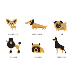 breeds dogs collection chihuahua dachshund vector image
