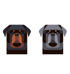 Colored and gray rottweiler portrait in geometric vector