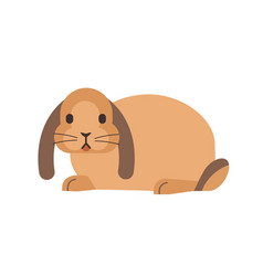 Little domestic lop-eared rabbit or bunny funny vector
