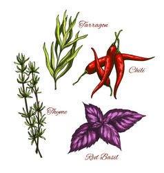 sketch icons of spices and herbal vector image vector image