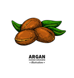 argan drawing organic essential oil sketc vector image