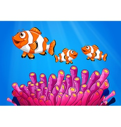 Clownfishes under the sea vector