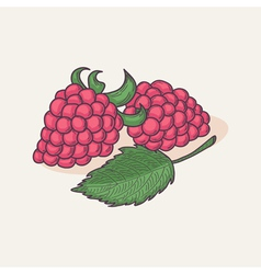 Hand drawn raspberry isolated vector image