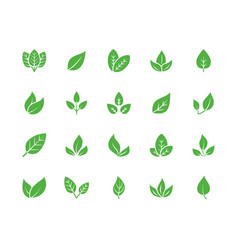 leaf flat glyph icons plant tree leaves vector image
