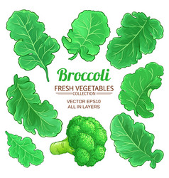 Broccoli elements set on white background vector