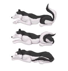 Husky breed dog animal vector