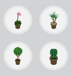 Isometric plant set of grower peyote houseplant vector