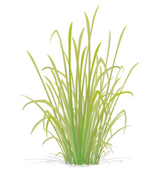Large tuft grass vector