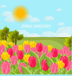 Tulip flowers field sunny day blue sky vector