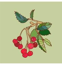 rowanberry vector image