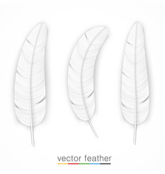 white feather on white background set vector image vector image