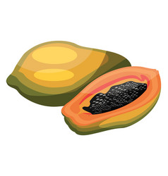 cartoon of a green and yellow papaya a papaya cut vector image