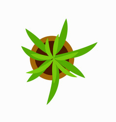 green plant in pot icon vector image
