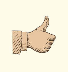 hand showing like symbol sketch thumbs up vector image