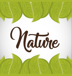 Nature and leaves design vector